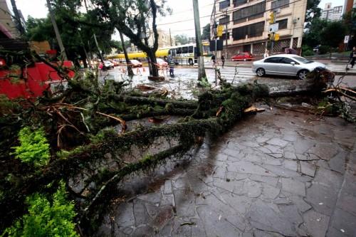 Protásio Alves é uma das vias que registrou queda de árvore (Foto: Jackson Ciceri/O Sul)
