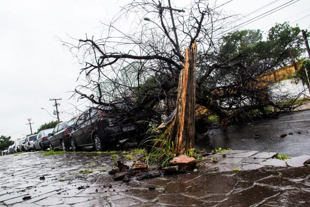 Nesta quarta-feira, os ventos podem chegar a 100 km/h em Porto Alegre, provocando a queda de árvores (Foto: Jackson Ciceri/O Sul)