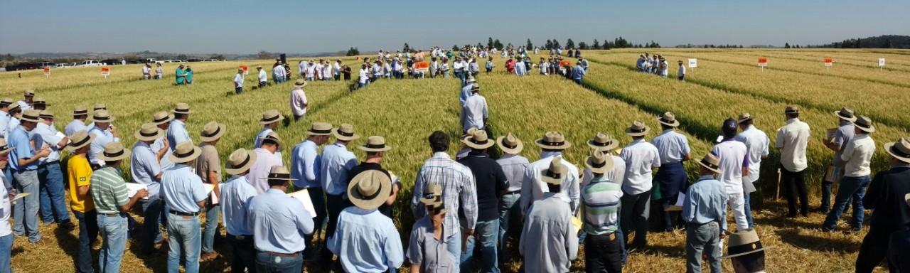 Dia de Campo Apucarana - Biotrigo Genetica