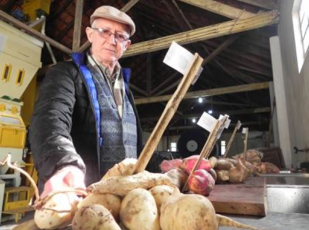 Pesquisa da Fetagro com batata-doce para produção de àlcool