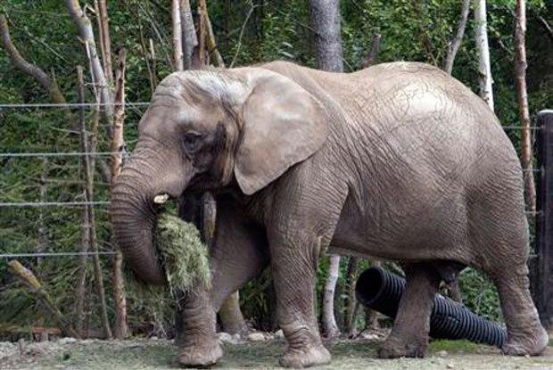 Mulher que levou pedrada de um elefante ao visitar um zool gico vai receber indeniza o jornal - Que hay en portugal ...