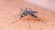 Zika vírus é transmitido pelo mosquito Aedes aegypti (Foto: Reprodução)