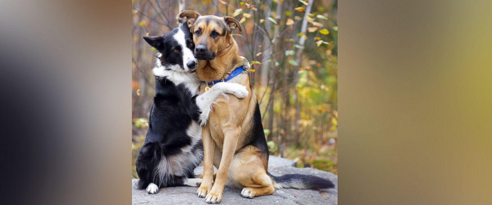 cães amigos2