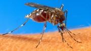 zika e Aedes não foram incluídos entre os que podiam ser usados por terroristas, o que atrasou pesquisas. (Foto: AP)