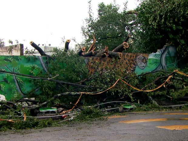 Temporal derrubou muro e árvores em escola estadual de Guarulhos. (Foto: Reprodução)