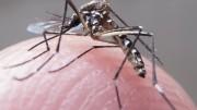 O mês de agosto tem baixa incidência das doenças provocadas pelo Aedes aegypti. (Foto: Rafael Neddermeyer/Fotos Públicas)