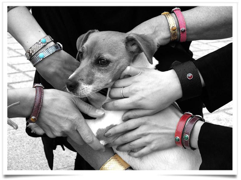 O pet é o centro das atenções com a charmosa coleira da Pet & Stones. (Foto: Reprodução)