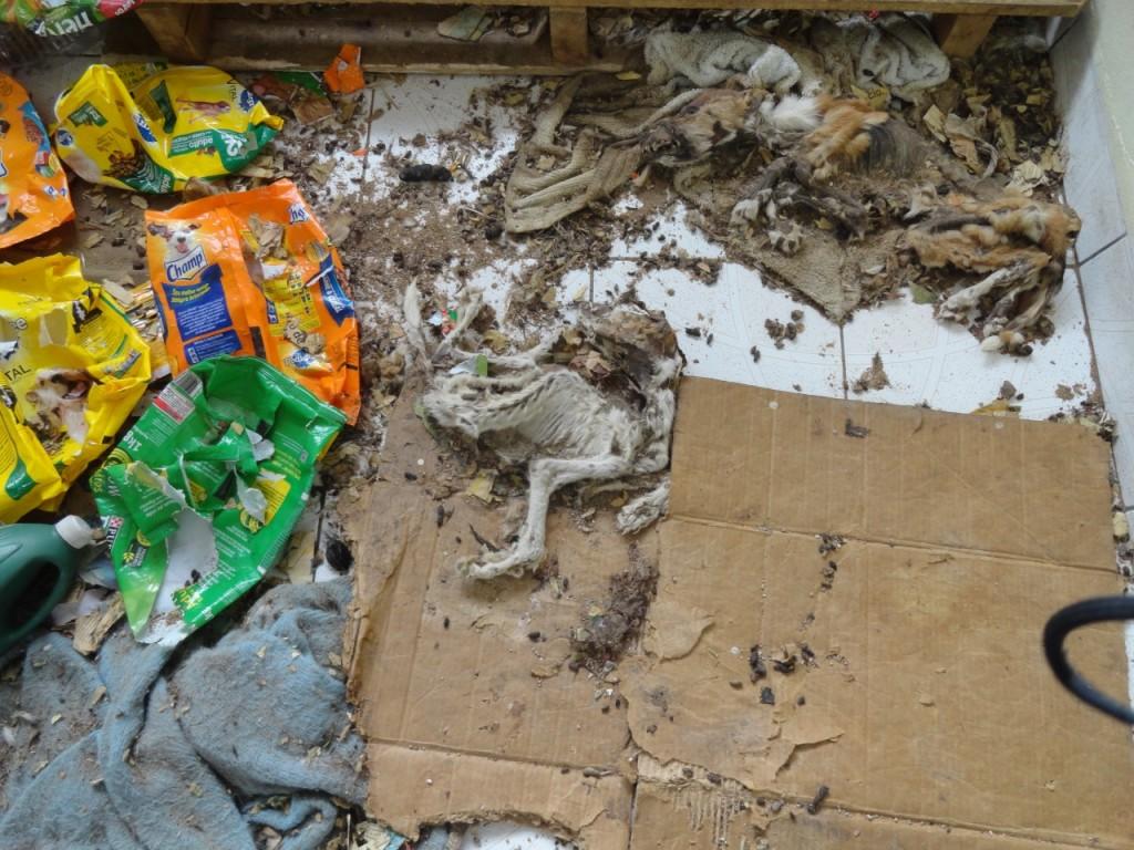 Restos mortais de ao menos 24 animais foram encontrados. (Foto: Patrulha Ambiental da BM/Divulgação)