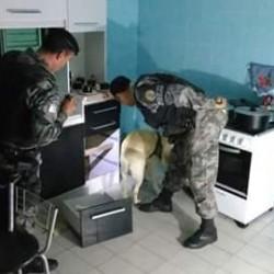 Cães da BM foram utilizados para localizar drogas. (Foto: BM/Divulgação)