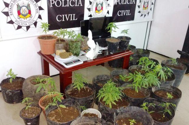 Os pés de maconha ficavam em uma espécie de estufa improvisada. (Foto: Polícia Civil/Divulgação)