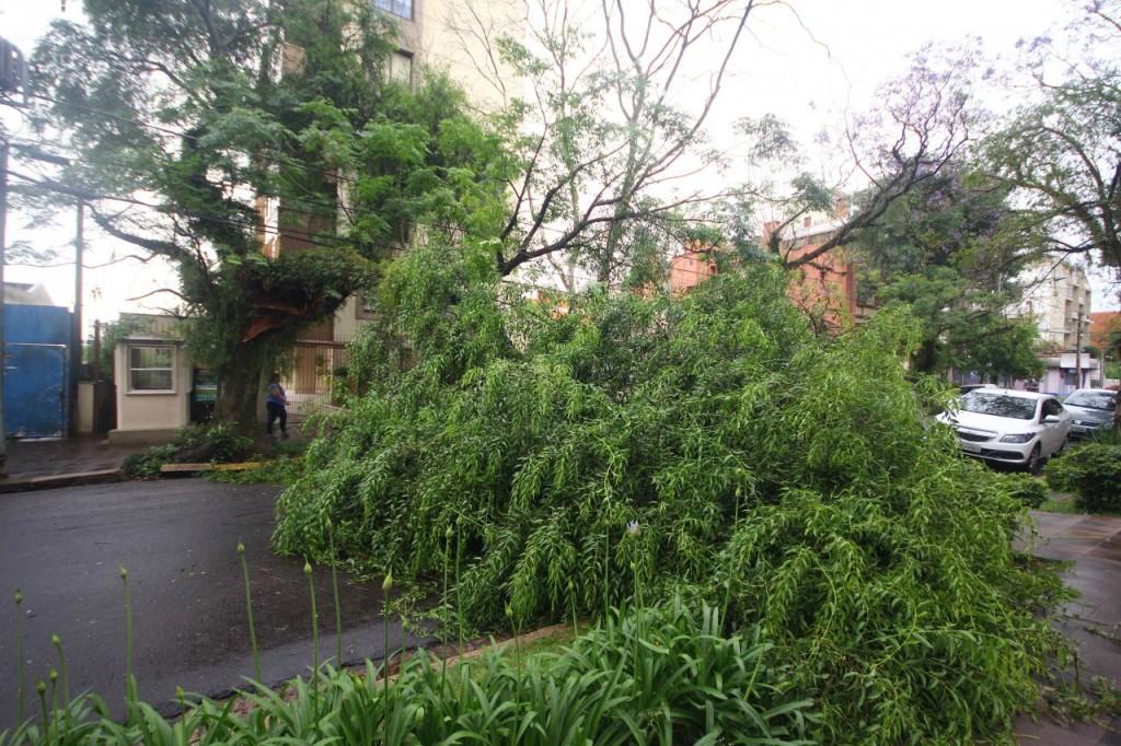 Queda de árvore ocorreu durante a madrugada (Foto: Jackson Ciceri/O Sul)