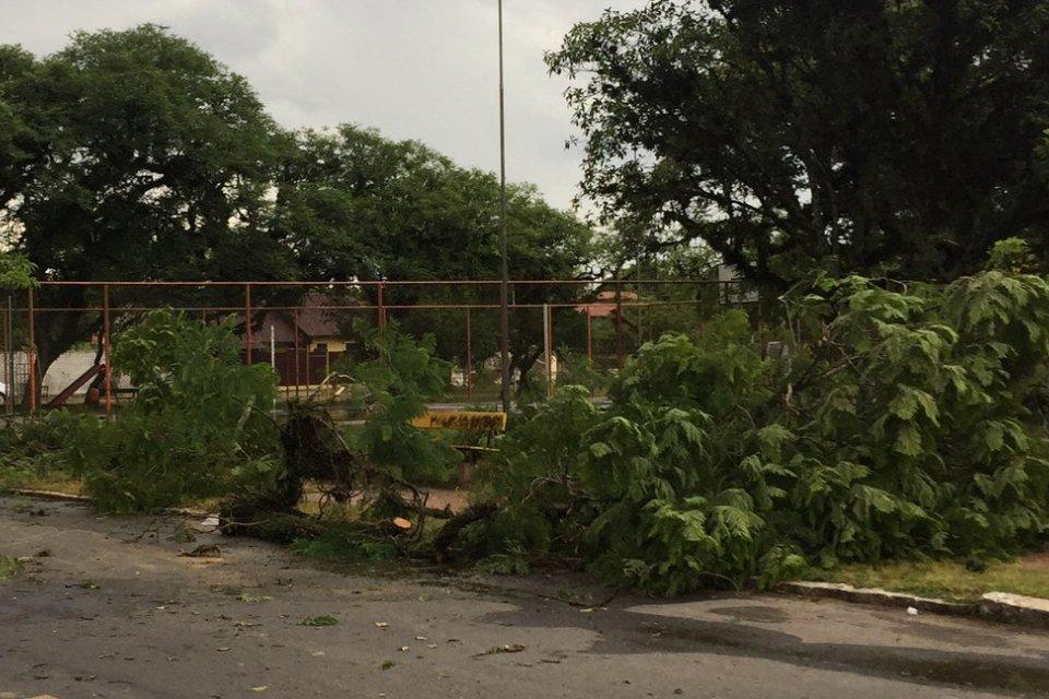 Árvore caiu em Belém Novo, na Zona Sul da Capital (Foto: Fábio Torales/Divulgação)