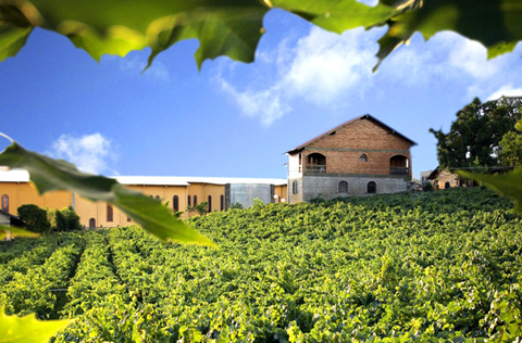 Vinícola oferece diversas opções de pacotes para quem quiser vivenciar a tradicional época da colheita de uvas.