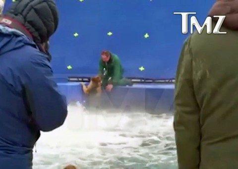 """Vídeo do TMZ mostra cão forçado a entrar em águas turbulentas na gravação do filme """"Quatro vidas de um cachorro"""".  (Foto: Reprodução)"""