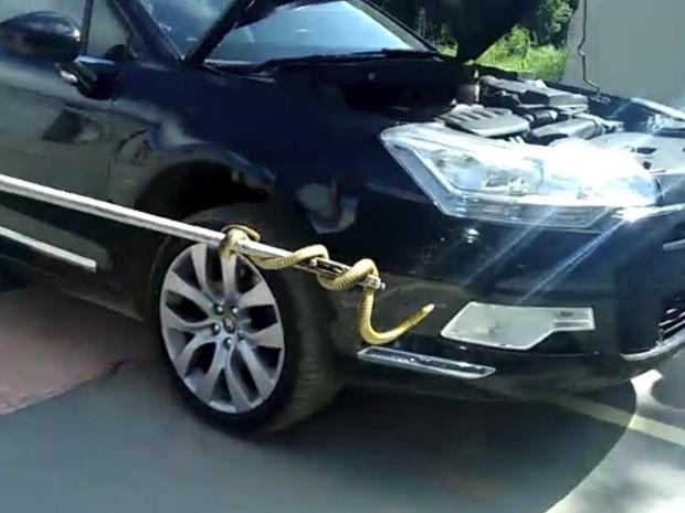 Cobra foi retirada do motor de um Ômega em SC. (Foto: Divulgação)