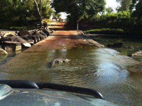 Crocodilo atacou homem que cruzou ponte a pé (Foto: Reprodução)