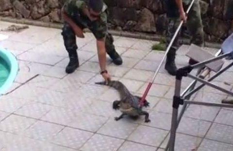 Animal foi capturado e levado a Estação Ecológica de Carijós (Foto: Reprodução/Facebook)