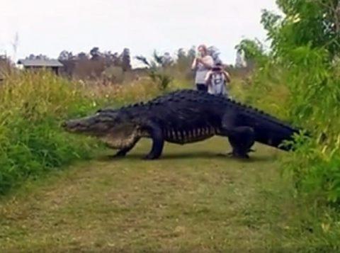 Jacaré foi chamado de dinossauro. (Foto: Reprodução)