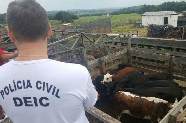 Foram verificadas irregularidades no abate e armazenagem dos produtos. (Foto: PC/Divulgação)