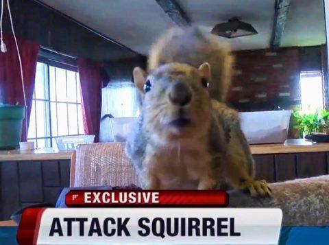 Esquilo de estimação vira herói nos EUA ao impedir roubo de casa. (Foto: Reprodução)