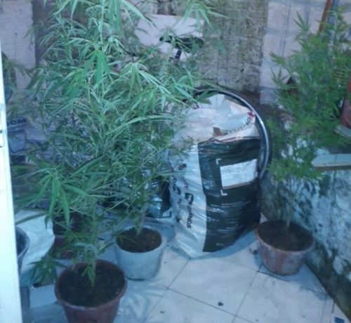 Parte das plantas estava em vasos. (Foto: BM/Divulgação)