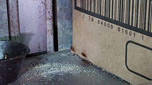 Foi verificada a presença de insetos vivos (Foto: Divulgação/Polícia Civil)