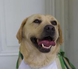 Pipa, da raça Labrador, com o Rabinho Supersônico. Ela cria um campo de força ao redor das pessoas, afastando o tédio e restabelecendo a energia positiva do ambiente (Foto: Divulgação)