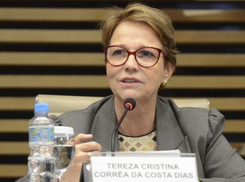 """Ministra da Agricultura diz que o Brasil """"não deve se meter"""" na guerra comercial entre China e Estados Unidos"""
