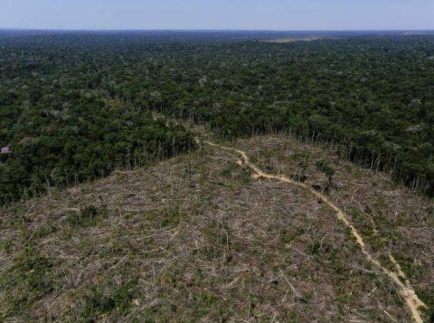Desmatamento na Amazônia bate recorde e cresce quase 30% em 12 meses
