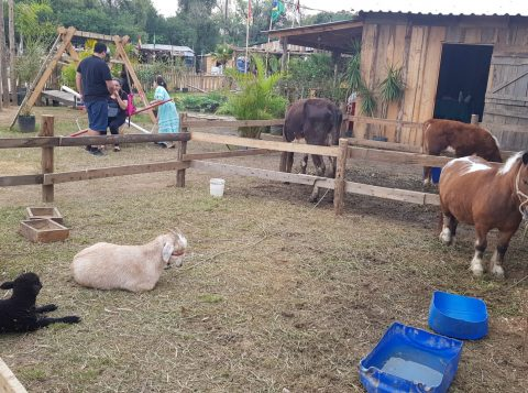 Fazendinha encanta visitantes no Parque Harmonia