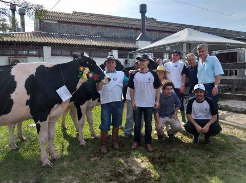 Título da raça Holandesa em Pelotas fica com exemplar de São Lourenço do Sul