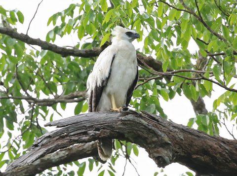 Após mais de cem anos, uma ave rara voltou a ser observada no Rio Grande do Sul