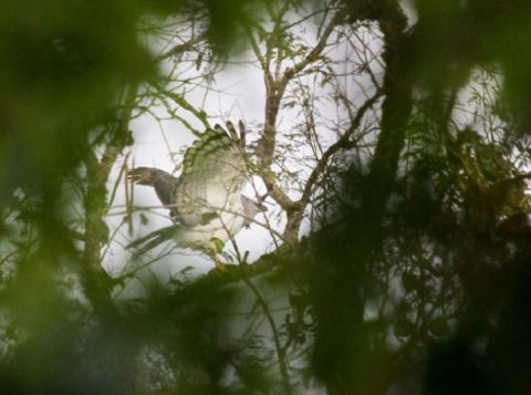Pássaro raro é observado no Rio Grande do Sul