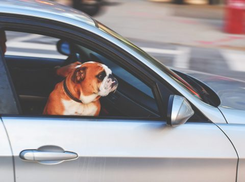 Uber lança modo de viagem para levar animal de estimação nos Estados Unidos