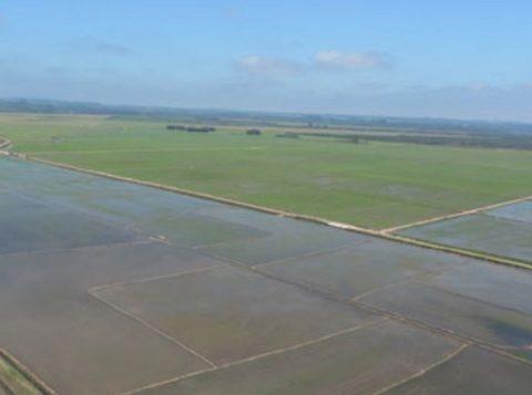 Fiscais da Fepam combatem irregularidades ambientais em áreas agrícolas próximas ao rio Gravataí