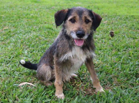 O abrigo temporário da prefeitura de Porto Alegre já garantiu neste ano mais de 100 adoções de cães e gatos