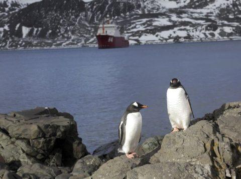 Conheça algumas curiosidades de como é viver na Antártica