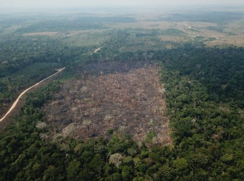Desmatamento da Amazônia volta a subir em outubro e, no ano, é 83% maior que em 2018