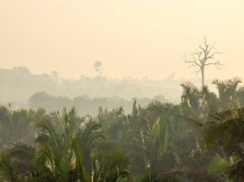 Estudo da Nasa indica que atividades humanas estão secando o ar da Amazônia