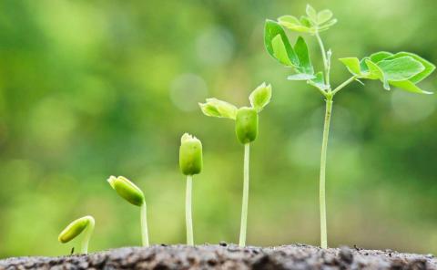 A ciência garante que as plantas reagem e emitem vibrações